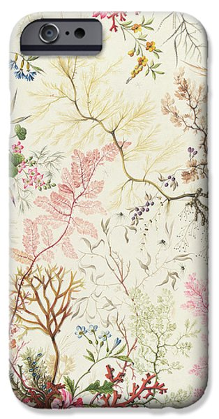 Seaweed design for silk material iPhone Case by William Kilburn