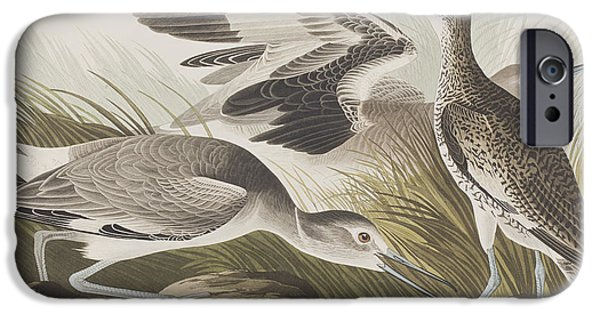Audubon iPhone Cases - Semipalmated Snipe or Willet iPhone Case by John James Audubon