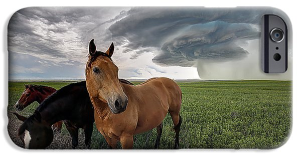 Recently Sold -  - Animals Photographs iPhone Cases - Sensing the Storm iPhone Case by Zach  Roberts