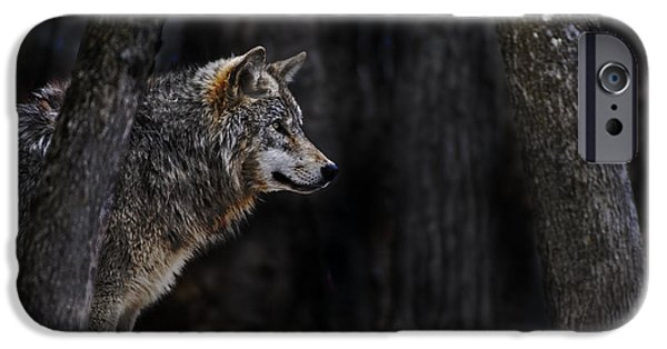 Wolf Pics Mixed Media iPhone Cases - Sentinel iPhone Case by Michael Cummings