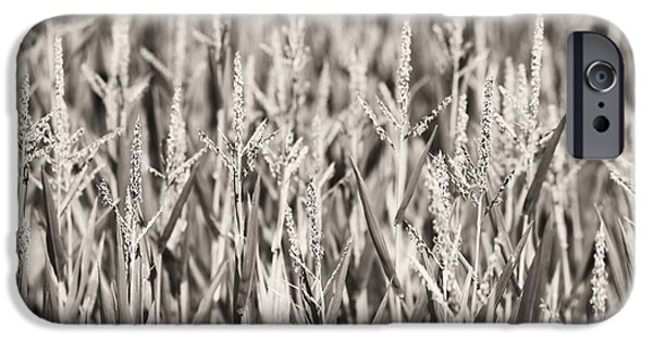 Sweet Corn iPhone Cases - Sepia Corn Field iPhone Case by Dan Sproul