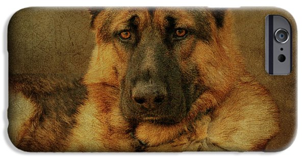 Alsatian iPhone Cases - Serious iPhone Case by Sandy Keeton