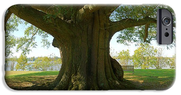 Park Scene Digital Art iPhone Cases - Shade Tree 2 Panoramic iPhone Case by Mike McGlothlen