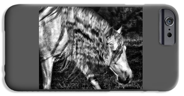 Gray Hair iPhone Cases - Shadowland Stallion D1701 iPhone Case by Wes and Dotty Weber