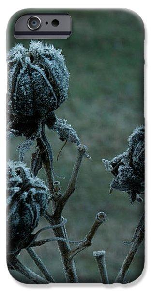 Shadowy Frozen Pods from the Darkside iPhone Case by Douglas Barnett