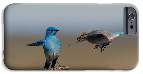 Bluebird iPhone Cases - Share My Post iPhone Case by Mike Dawson