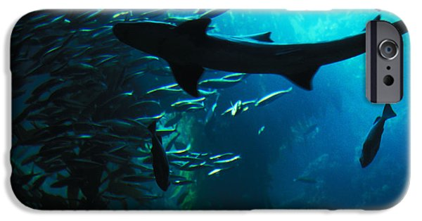 Shark iPhone Cases - Shark Above iPhone Case by Carl Purcell