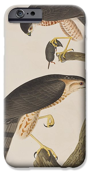 Falcon iPhone Cases - Sharp-shinned Hawk iPhone Case by John James Audubon