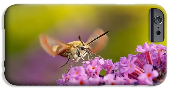 Birds iPhone Cases - Like a Rainbow - broad bordered bee hawk-moth iPhone Case by Roeselien Raimond