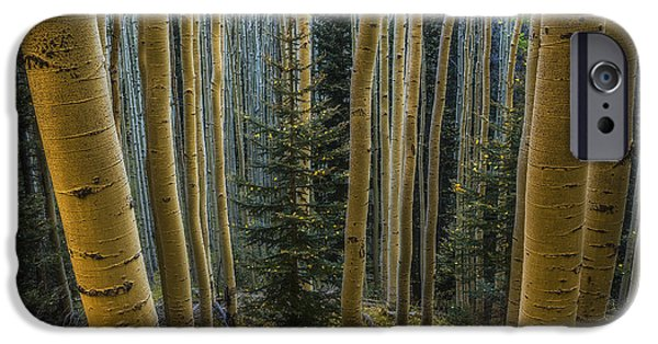Shed iPhone Cases - Shedding iPhone Case by Peter Coskun