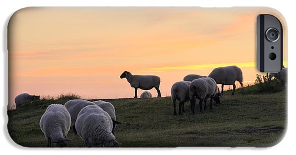Grazing Sheep iPhone Cases - Sheep At Sunset iPhone Case by Sophie De Roumanie