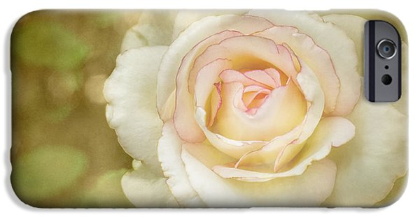 Botanical iPhone Cases - Sheer Grace iPhone Case by ArtissiMo Photography