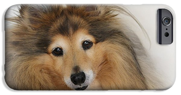 Sheltie iPhone Cases - Sheltie Dog - A sweet-natured smart pet iPhone Case by Christine Till