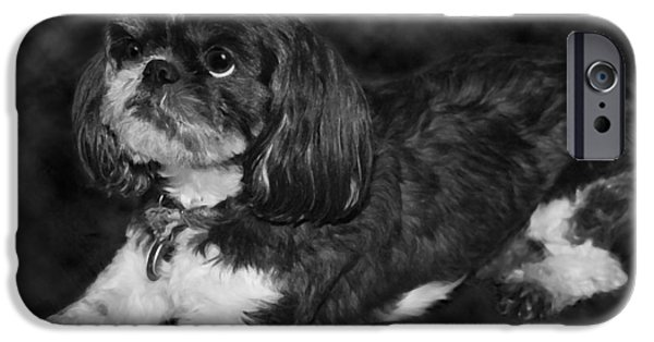 Black Dog iPhone Cases - Shih Tzu iPhone Case by Adam Romanowicz