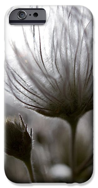 Shimmering Flower I iPhone Case by Ray Laskowitz - Printscapes
