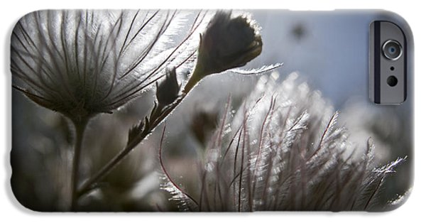 Gray Hair iPhone Cases - Shimmering Flower II iPhone Case by Ray Laskowitz - Printscapes