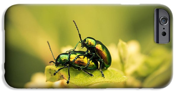 Beetle iPhone Cases - Shiny Pair iPhone Case by Shane Holsclaw