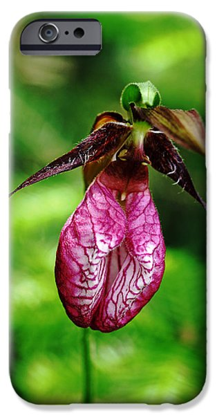 Pines iPhone Cases - Showy Lady Slipper iPhone Case by Debbie Oppermann