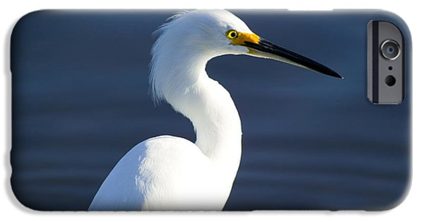 Snowy Egret iPhone Cases - Showy Snowy Egret iPhone Case by Rich Franco