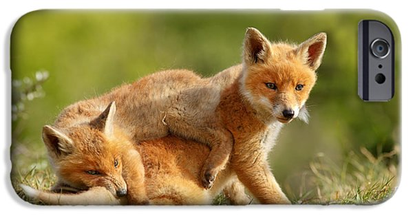 Fox iPhone Cases - Sibbling Love - Playing Fox Cubs iPhone Case by Roeselien Raimond