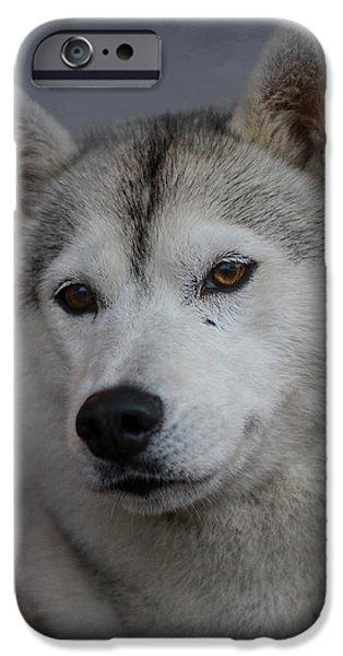Huskies iPhone Cases - Siberian Husky iPhone Case by Jai Johnson