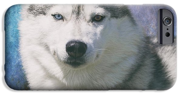 Husky iPhone Cases - Siberian Husky Portrait iPhone Case by Wolf Shadow  Photography