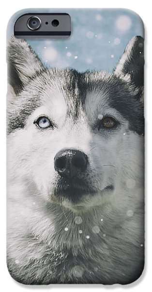 Husky iPhone Cases - Siberian Husky with Snowflakes iPhone Case by Wolf Shadow  Photography