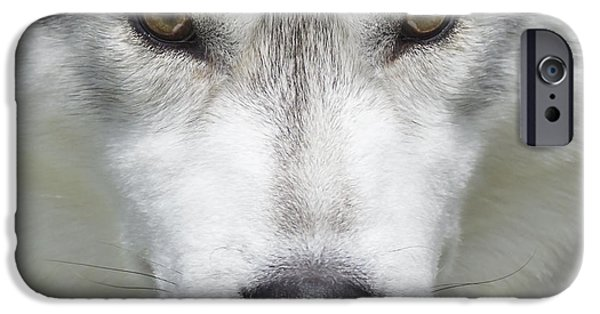 Husky iPhone Cases - Siberian Husky Portrait 1 iPhone Case by Wolf Shadow  Photography