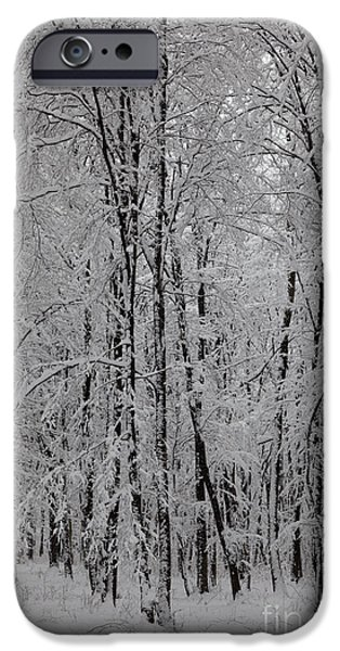 Wintertime iPhone Cases - Silence of winter iPhone Case by Gabriela Insuratelu