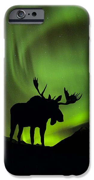 Snowy Night iPhone Cases - Silhouette Of Moose With Green Aurora iPhone Case by John Hyde