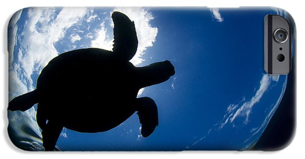 Animal Wisdom iPhone Cases - Silhouette of Turtle iPhone Case by Dave Fleetham - Printscapes