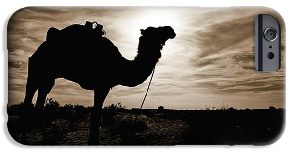 Camel Photographs iPhone Cases - Silhouetted Camel, Sahara Desert, Douz iPhone Case by David DuChemin
