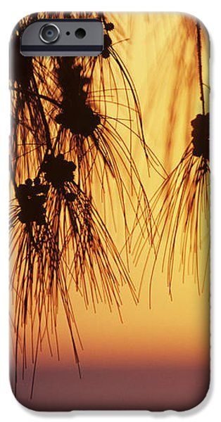 Silhouettes iPhone Case by Rita Ariyoshi - Printscapes