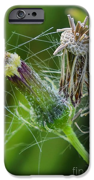 Plant Jewelry iPhone Cases - Simplicity of Continuity iPhone Case by Olga Hamilton