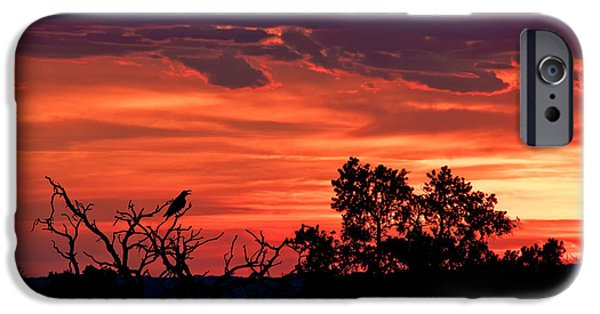Crows iPhone Cases - Sing To The Fire In The Sky iPhone Case by Renee Sullivan