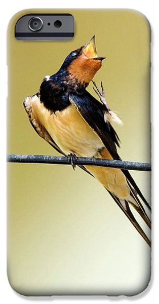 Best Sellers -  - Barn Swallow iPhone Cases - Singing Swallow  iPhone Case by Cliff  Norton