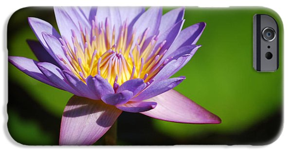 Nymphaea iPhone Cases - Single Purple Water Lily Number One iPhone Case by Heather Kirk