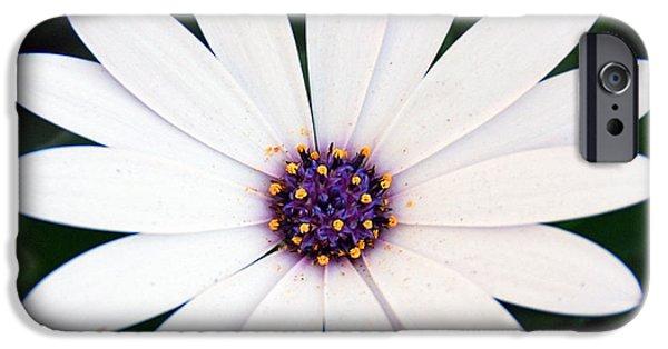 Woman Gift iPhone Cases - Single White Daisy Macro iPhone Case by Georgiana Romanovna