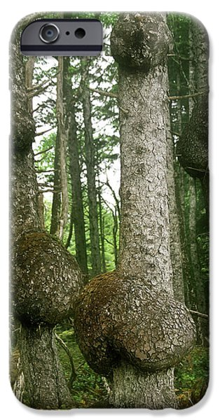 Abnormal iPhone Cases - Sitka Spruce Burls on the Olympic Coast Olympic National Park WA iPhone Case by Christine Till