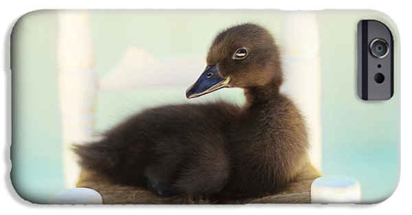 Duckling Photography iPhone Cases - Sitting Pretty iPhone Case by Amy Tyler