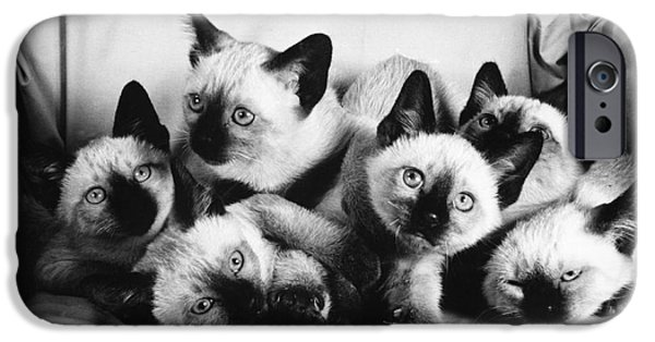 Animal Portraiture iPhone Cases - Six Siamese Kittens iPhone Case by Ylla