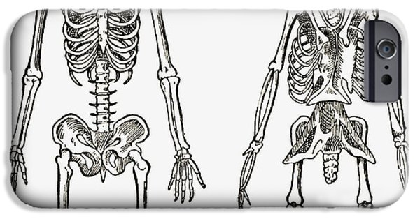 Skeleton Drawings iPhone Cases - Skeletons Of A Man And A Bird Drawn To iPhone Case by Ken Welsh