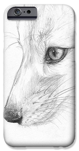 Nature Study iPhone Cases - Sketchy Fox Face Study iPhone Case by Brandy Woods