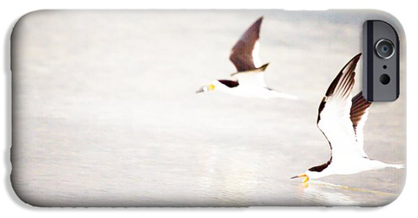 Flying Seagull iPhone Cases - Skimmers High Key 2 by Darrell Hutto iPhone Case by Darrell Hutto