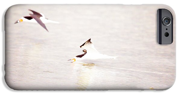 Flying Seagull iPhone Cases - Skimmers High Key by Darrell Hutto iPhone Case by Darrell Hutto