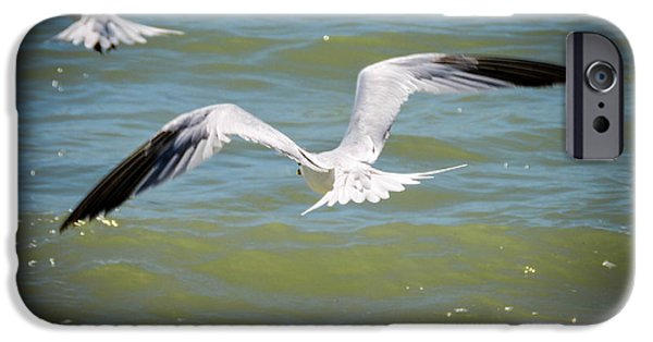 Sea Birds iPhone Cases - Skimmers In Flight iPhone Case by Marilee Noland