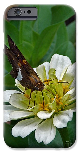 Pictures Of Cats Photographs iPhone Cases - Skipper Two iPhone Case by Skip Willits