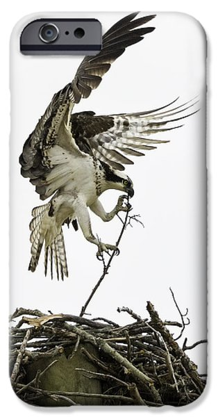 Recently Sold -  - Animals Photographs iPhone Cases - Sky Ballet iPhone Case by Everet Regal