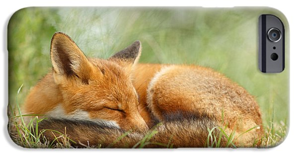 Juveniles iPhone Cases - Sleeping Cutie - Red Fox in the Grass iPhone Case by Roeselien Raimond