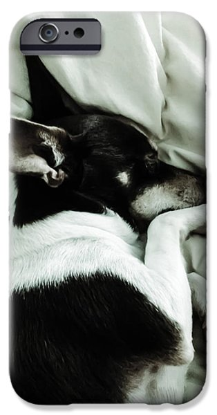 Recently Sold -  - Puppy Digital iPhone Cases - Sleeping Squib iPhone Case by Heather Joyce Morrill